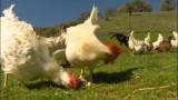El emotivo mundo de los animales de granja