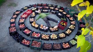 Cambio permanente – Permacultura: hacia una cultura de paz