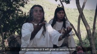 El espíritu de la vida: La ley de origen – Sabiduría Ancestral