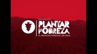 Plantar Pobreza: El negocio forestal en Chile