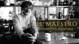 El Maestro Humberto Maturana